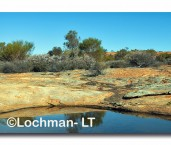 Great Western Woodlands - Burra rock  AED-099  ©Marie LochmanLT copy