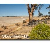 Great Western Woodlands-Lake Johnson ACD-190 ©  Marie Lochman LT
