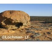 Great Western Woodlands-Victoria Rock ACD-194 ©  Marie Lochman LT