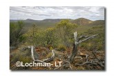 Helena Aurora Range AED-090 ©Marie LochmanLT