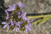 Anthotium humile LLN-426 ©Jiri Lochman- Lochman LT.
