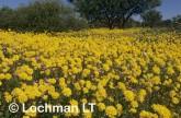 Biodiversity of flora XJ-657 © Jiri Lochman LT