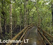 Daintree Tropical Rainforest