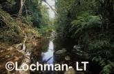 Washpool NP - Coombadjha Creek