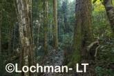 Subtripical rainforest