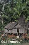 PNG- East Sepik Province-Palenbei village-market garden VTY-665 ©Alex Steffe - Lochman LT