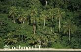 PNG- Milne Bay Province-Bobo Eina Island VTY-480 ©Alex Steffe - Lochman LT