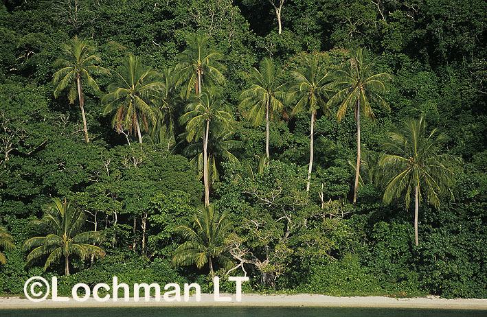 Milne Bay Province –  Bobo Eina Island