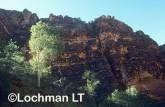 Purnululu Natioanl Park - Bungle Bungles - Piccaninny Gorge