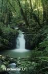 Qld-Lamington NP - subtropical rainforest AWY-816w ©Marie Lochman - Lochman LT
