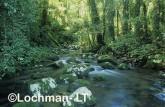 Subtropical rainforest fringing Toolona Creek