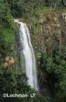 Qld-Lamington NP - subtropical rainforest PXY-366w ©Jiri Lochman - Lochman LT