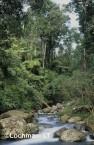 Qld-Lamington NP - subtropical rainforest PXY-390w ©Jiri Lochman - Lochman LT