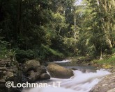 BluePool at Canungra Creek