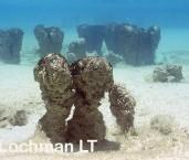 Shark Bay World Heritage Area  - Hamelin Pool - Stromatolites