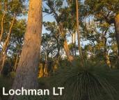 Eucalyptus marginata-Jarrah AED-022 © Marie LochmanLT