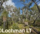 Eucalyptus marginata - Jarrah forest LLP-700 ©Jiri Lochman LT