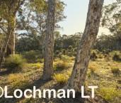 Eucalyptus wandoo - Wandoo woodland AED-641 ©Marie Lochman - Lochman LT