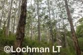 Boranup Karri forest LLK-902 ©Jiri Lochman - Lochman LT