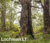 Eucalyptus jacksoni   Red Tingle AED-007 © Marie LochmanLT