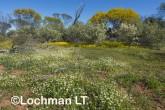 Biodiversity of annuals AGD-245 ©Marie Lochman LT