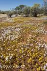 Biodiversity of annuals AGD-247 ©Marie Lochman LT