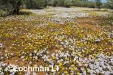 Biodiversity of annuals AGD-248 ©Marie Lochman LT