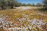 Biodiversity of annuals AGD-249 ©Marie Lochman LT
