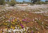 Biodiversity of annuals AGD-250 ©Marie Lochman LT