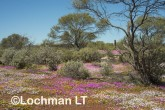 Biodiversity of annuals AGD-252 ©Marie Lochman LT