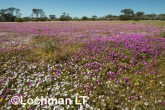 Biodiversity of annuals AGD-254 ©Marie Lochman LT