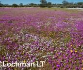 Biodiversity of annuals AGD-255 ©Marie Lochman LT