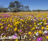 Biodiversity of annuals LLR-354 ©Jiri Lochman LT
