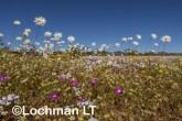 Biodiversity of annuals LLR-356 ©Jiri Lochman LT