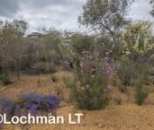 Kwongan Biodiversity AGD-359 ©Marie Lochman - Lochman LT
