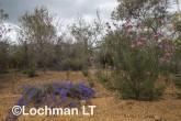 Kwongan Biodiversity AGD-360 ©Marie Lochman - Lochman LT