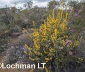 Kwongan Biodiversity AGD-365 ©Marie Lochman - Lochman LT