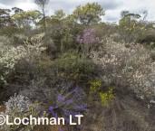 Kwongan Biodiversity AGD-371 ©Marie Lochman - Lochman LT
