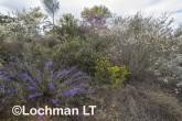 Kwongan Biodiversity AGD-372 ©Marie Lochman - Lochman LT