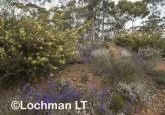 Kwongan Biodiversity AGD-373 ©Marie Lochman - Lochman LT