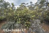 Kwongan Biodiversity AGD-374 ©Marie Lochman - Lochman LT
