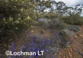 Kwongan Biodiversity AGD-375 ©Marie Lochman - Lochman LT