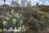 Kwongan Biodiversity LLR-431 ©Jiri Lochman - Lochman LT