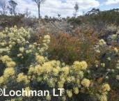 Kwongan Biodiversity LLR-432 ©Jiri Lochman - Lochman LT