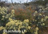 Kwongan Biodiversity LLR-433 ©Jiri Lochman - Lochman LT