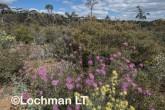 Kwongan Biodiversity LLR-435 ©Jiri Lochman - Lochman LT