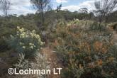 Kwongan Biodiversity LLR-437 ©Jiri Lochman - Lochman LT