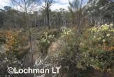 Kwongan Biodiversity LLR-440 ©Jiri Lochman - Lochman LT