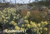 Kwongan Biodiversity LLR-441 ©Jiri Lochman - Lochman LT