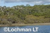 D'Entrecasteaux NP - Lake Yegarup LLR-662 ©Jiri Lochman LT
